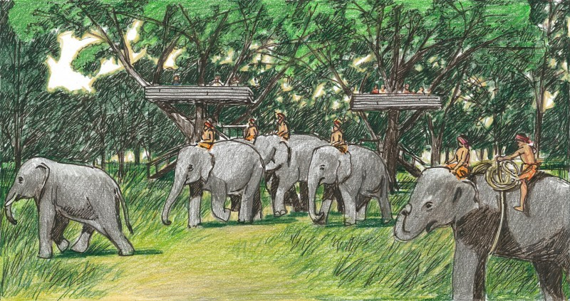 ELEPHANT KINGDOM SURIN